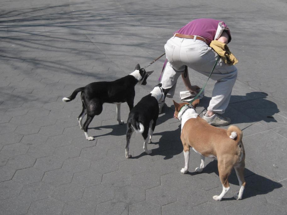 Dog Pooh, Downtown NY, 2011